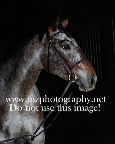 Mz Photography Net Blog Labor S End Sporthorses