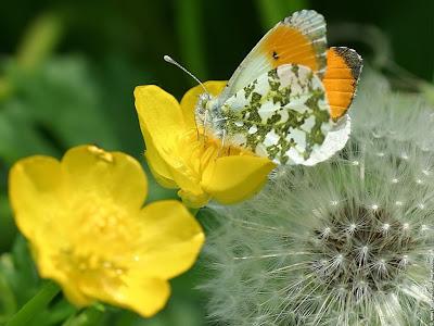 mariposa-posada-sobre-florecilla-amarilla