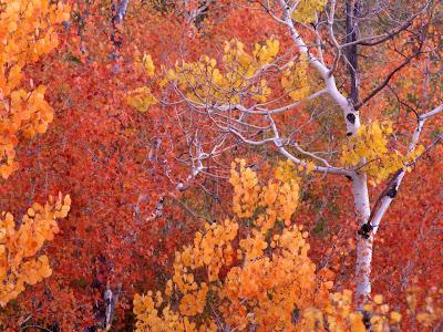 arboles-con-sus-hojas-en-periodo-otoñal