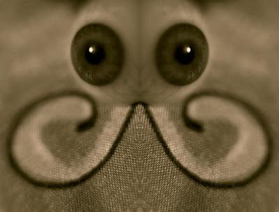 Mosquito - Image © 2007 David Toyne