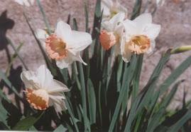 Flores para a Laura, para a Teresa e  para todas as pessoas que por aqui passam e deixam carinho...