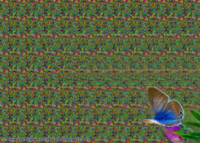 Magic eye: Butterflies  Count them | Stereograms - 3D