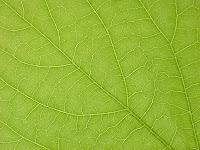 Textura de una hoja