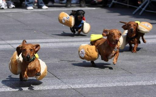 [wiener+races+cincinnati]