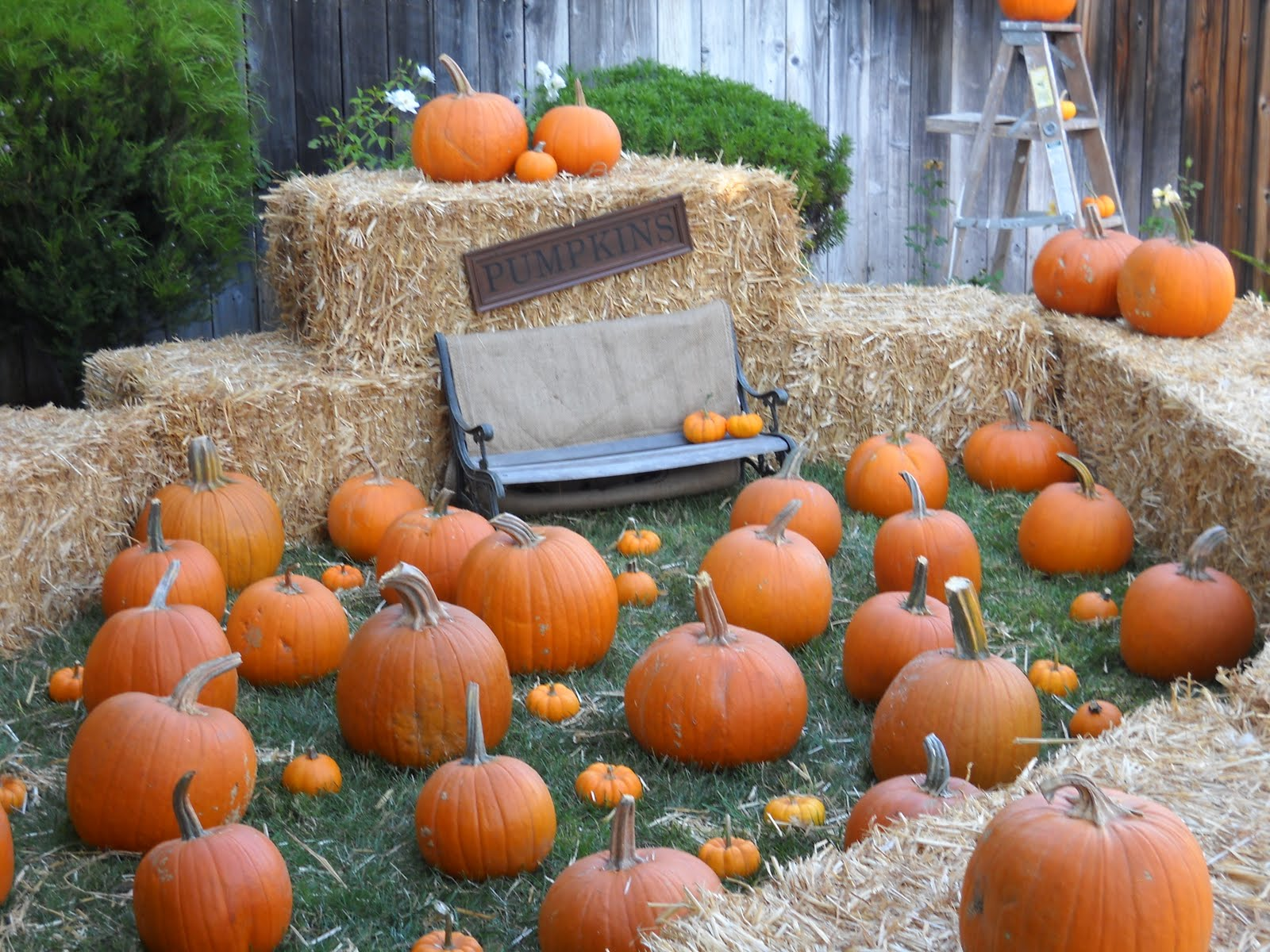 pumpkin patch photo ideas - rosespetitemaison Baby Jake s First Birthday or Pumpkin