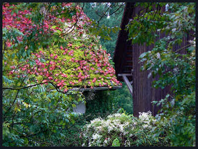 Based In Villigen Leafy Roof With Autumn Colors
