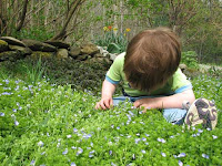 Toddler and Groundcover, May 2007, Vermont
