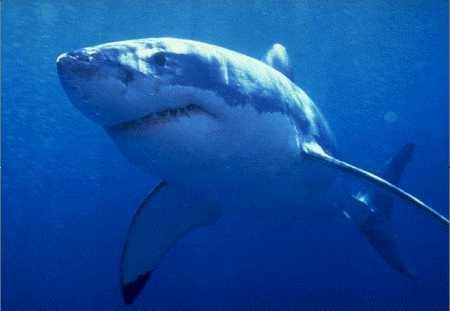 Aparece un tiburón de 3 metros en Santurtzi