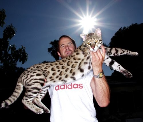 Australian Big Cats: Hybrid Cats