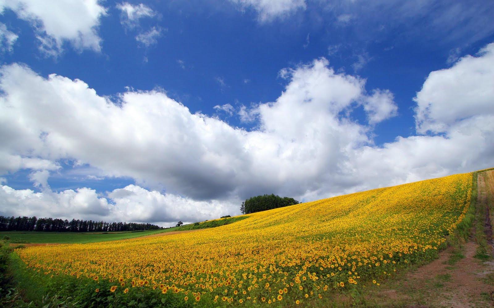 japan hokkaido landscape image - photo #3