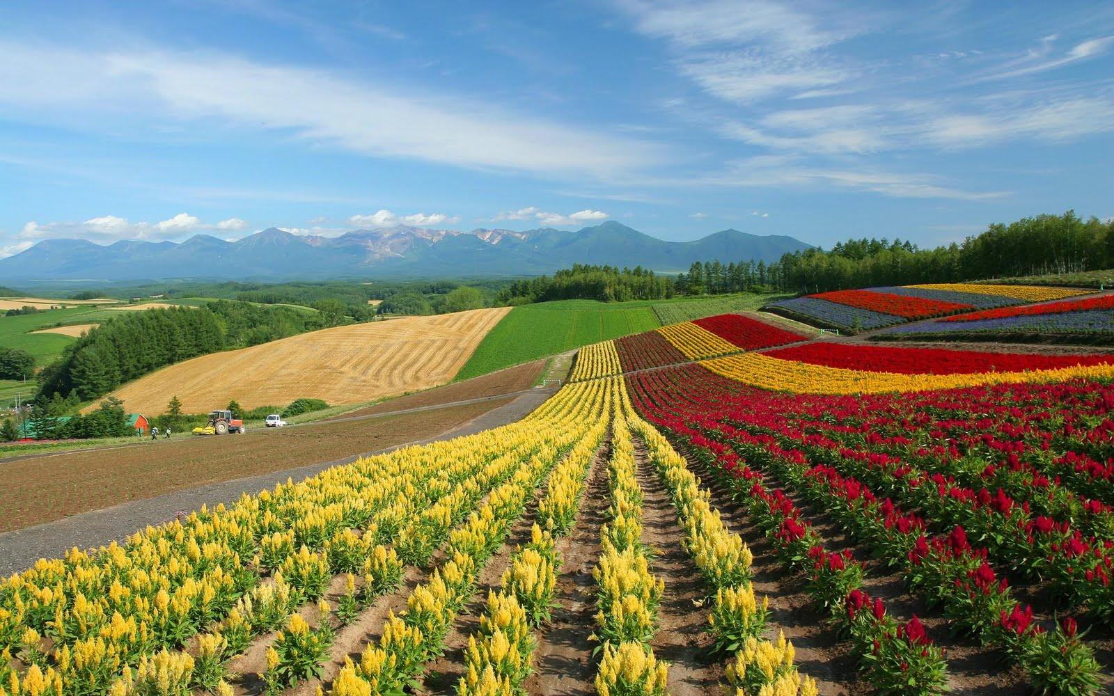 japan hokkaido landscape image - photo #7