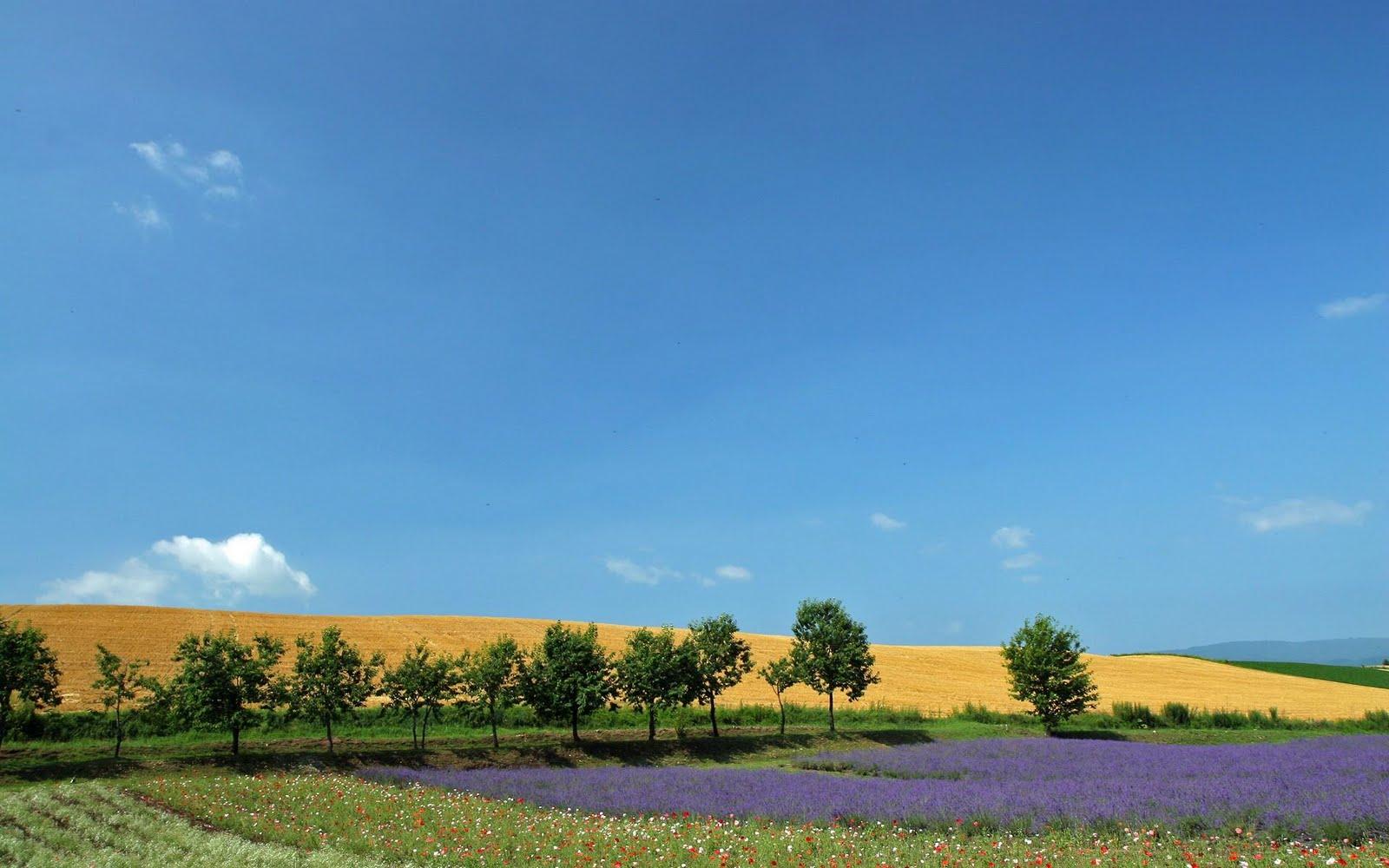 japan hokkaido landscape image - photo #9