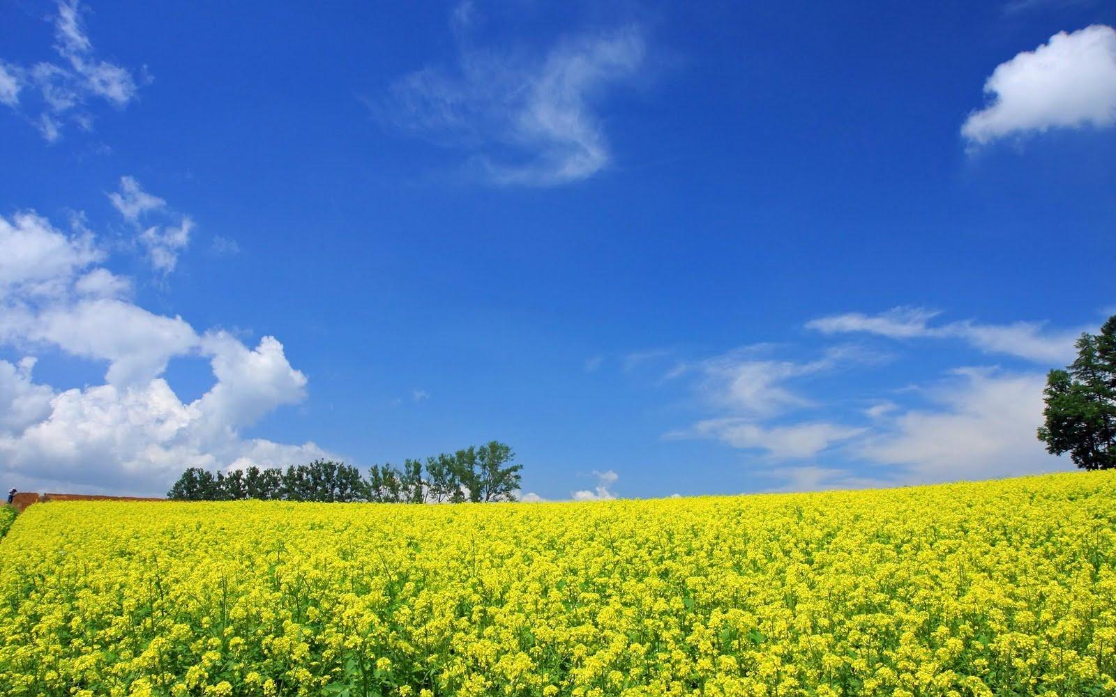 japan hokkaido landscape image - photo #13