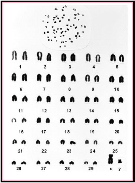 Biologi gonzaga kromosom letak sentromer berbeda beda dan perbedaan letak ini dapat digunakan sebagai dasar untuk klasifikasi struktur kromosom ccuart Images