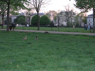 Duck duck arrows