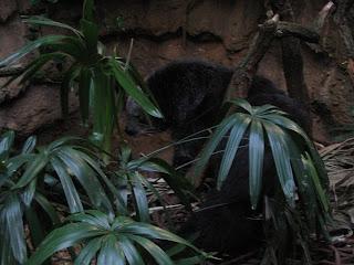 Bearcat!