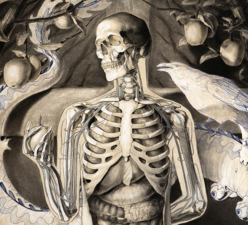 Design Cove Anatomical Illustrations By Michael Reedy