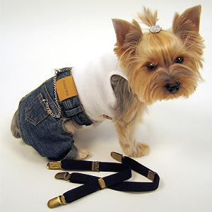 cão pantalon