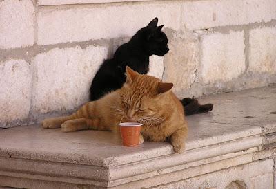 cats in dubrovnik, croatia