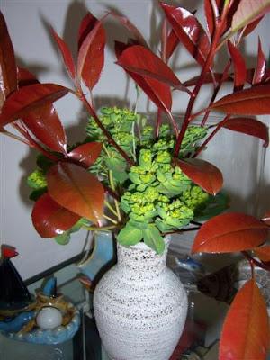 Papavero di campo ikebana con lucide foglie rosse di for Pianta con foglie rosse