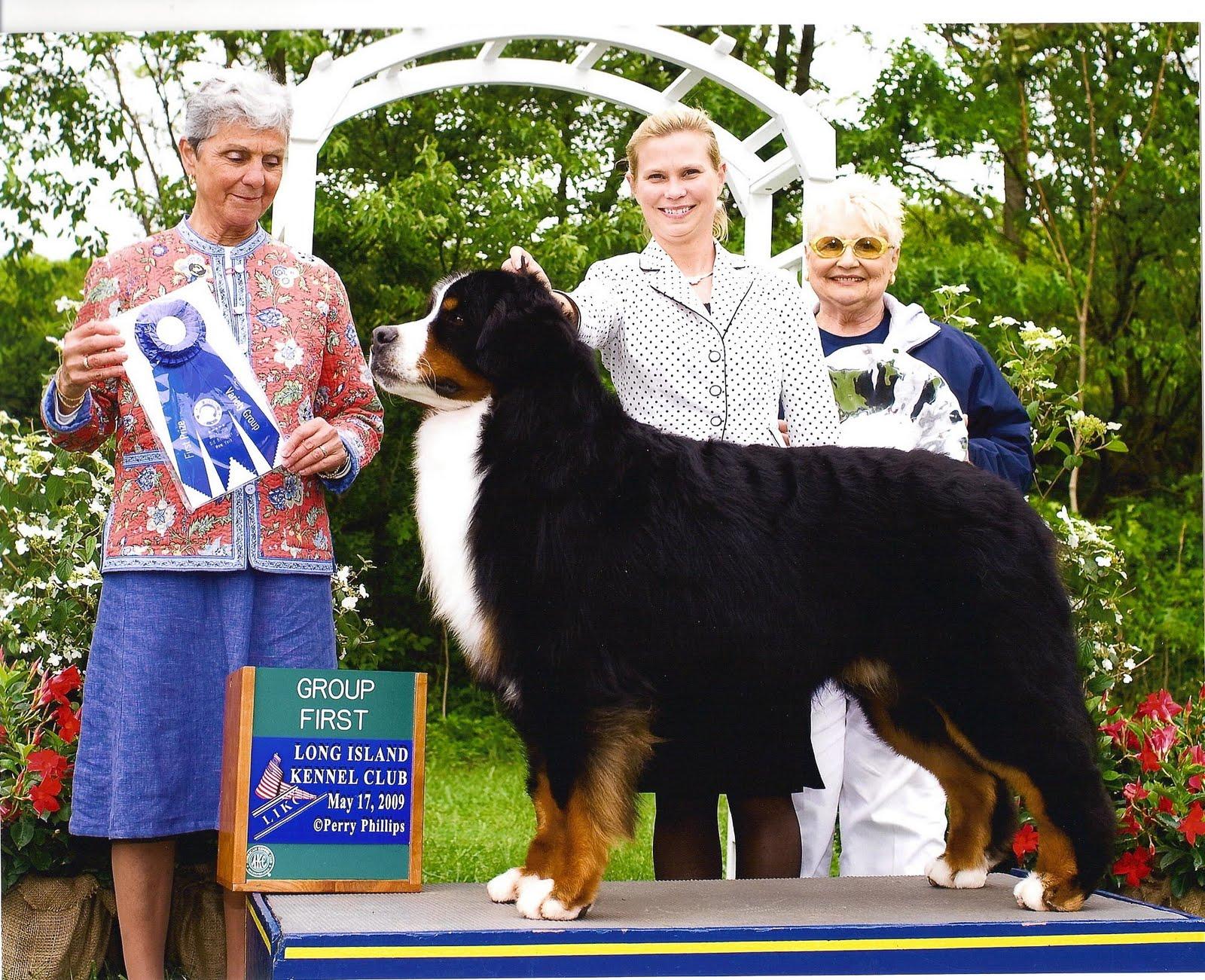 Bernese Mountain Dog Size | www.pixshark.com - Images ...