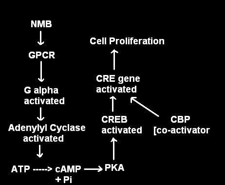 [gpcr+cycle.JPG]