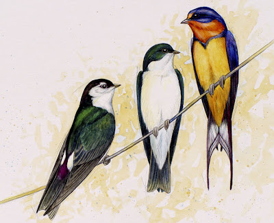 barn, tree and violet green swallow painting by Shari Erickson