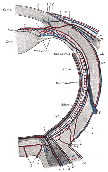 short posterior ciliary artery - meddic