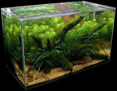 Ryby Akwariowe Spis Najpiękniejsze Galeria | Aquascape ...