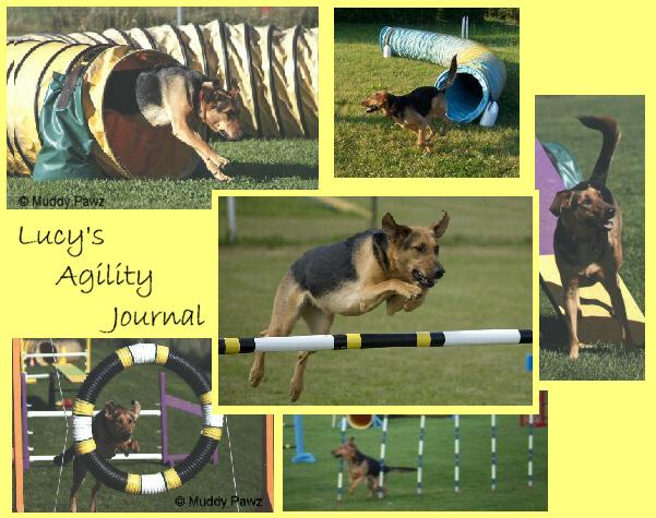 Lucy's agility blog