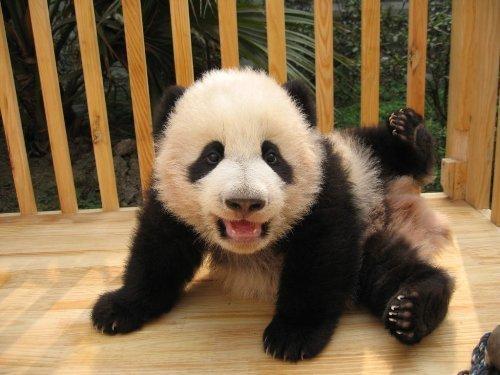 [Silly+Panda.bmp]
