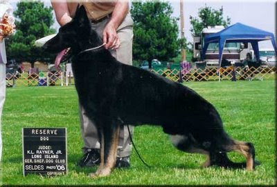 german shepherd information, black german shepherd puppies, german shepherd info, german shepherd size, breeding german shepherds, sable german shepherds, white german shepherd dog, black german shepherds, german shepherd silver, sable german shepherd, white german shepherd dogs, white german shepherd
