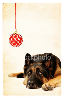 German shepherd Dog Christmas card, german shepherd christmas cards, christmas dog ecards, christmas dog picture, christmas dog photo, dog lovers christmas greetings, dog lovers christmas wish