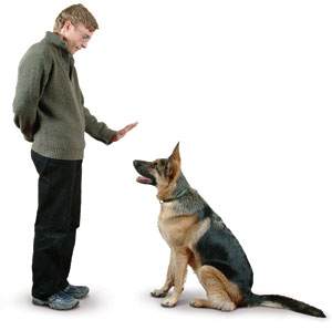 German Shepherd Dog Training Tips, training German Shepherd Dogs