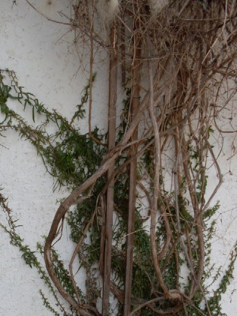 garten anders doppelte wandbegr nung mit kletterpflanzen. Black Bedroom Furniture Sets. Home Design Ideas