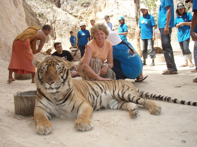 Thailand tigers