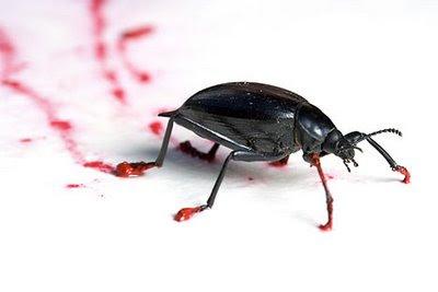 Ressam Böcekler