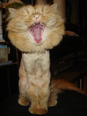 Cat or Lion