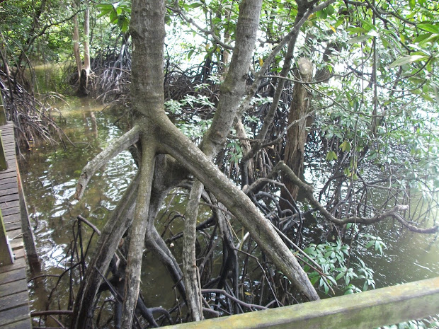 Geography Group Mangrove