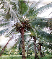 Herb of the Day: Coconut - Golden Triangle Circle (Beaumont