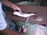 Como Limpiar el Pescado 2