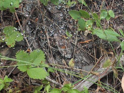 Dew on spider web Cave Creek trail Siskyou National Forest Oregon