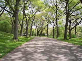 photo of road near Peters Hill in the Arnold Arboretum