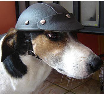 Farejador Pet Capacete Pra Cachorro