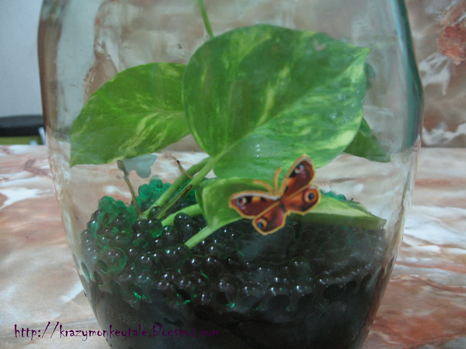 How To Grow Money Plant In Water Bottle