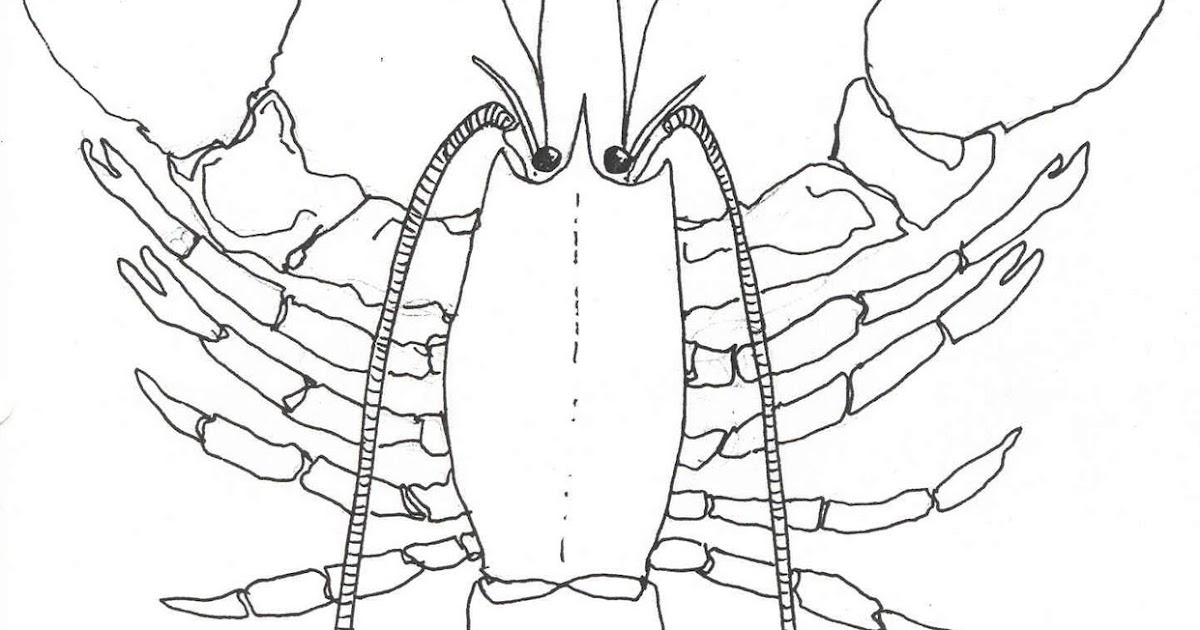kwoni's scavenger hunt: #38 an example of an asymmetric animal