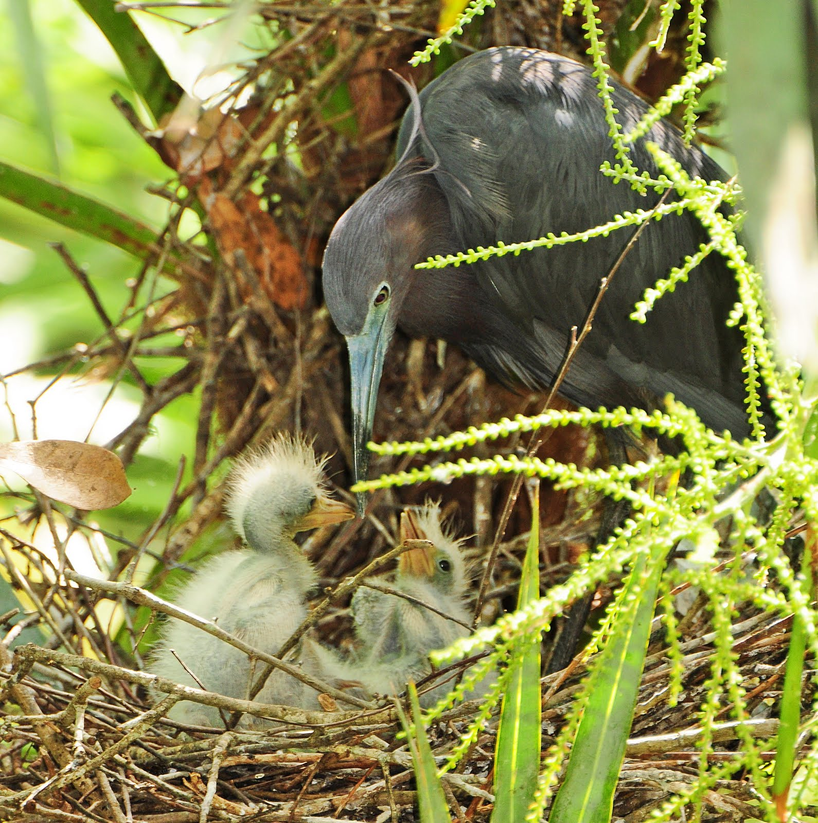Dina S City Wildlife Adventures Baby Birds At The Zoo