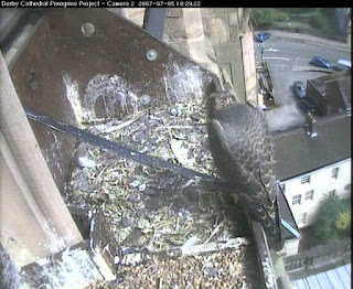 Juvenile at 10:30am local time today