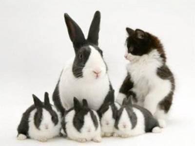 look alike bunnies and cat