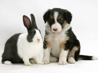 look alike bunny and dog